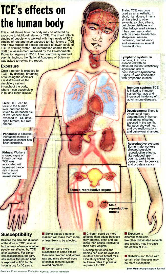 The effects of TCE on the human body